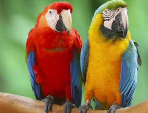 Uccelli sfrattati (di Carol Guarascio)