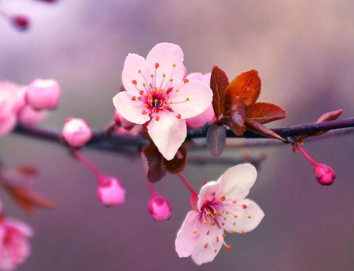 La primavera non lo sa (di Matilde Iaccarino)